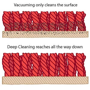 How To Deep Clean Your Carpet Carpet Cleaning Vancouver