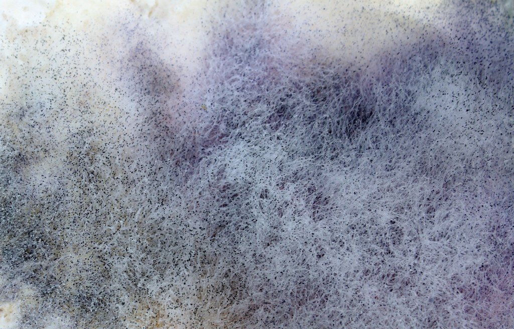 Kill Carpet Mold Out Removing Your Zen